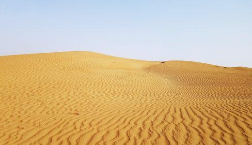 砂漠のオアシスはトイレだった|林の中は別世界だった・うんこだらけ